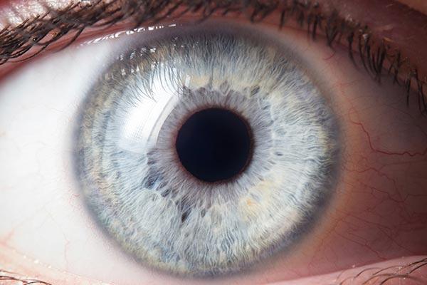 Funzionalita dell'occhio